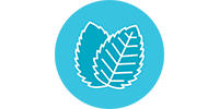 icon-wintergreen.png